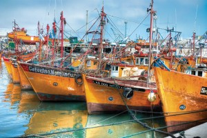 Colourful fishing boats at the marina